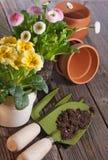 Het planten van de lentebloemen Stock Foto's
