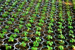 Het planten van de pot royalty-vrije stock foto's
