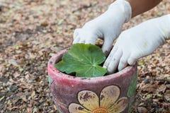 Het planten van een boom in pot Stock Foto's