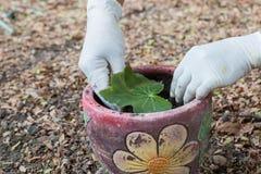 Het planten van een boom in pot Royalty-vrije Stock Afbeeldingen