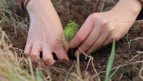 Het planten van een kleine boomspruit stock footage