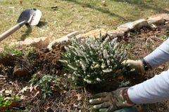 Het planten van een Tuin stock fotografie