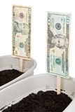 Het planten van geld voor een betere toekomst Royalty-vrije Stock Afbeelding