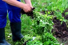 Het planten van groenten in de lente stock foto