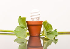 Het planten van Schone en Efficiënte Energie royalty-vrije stock foto's