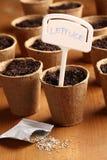 Het planten van sla Stock Afbeelding