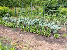 Het planten van tomaten Royalty-vrije Stock Foto's