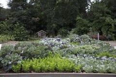 Het planten van tomaten Stock Afbeeldingen