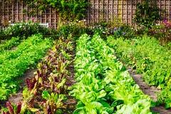 Het planten van tomaten Royalty-vrije Stock Afbeeldingen