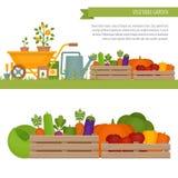 Het planten van tomaten Organisch en Gezond voedsel Verse groenten binnen vector illustratie