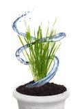 Het planten van water Royalty-vrije Stock Foto's