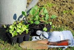 Het planten van zaailingen Stock Afbeeldingen
