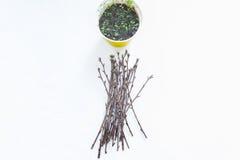 Het planten van zaailingen in potten op wit Royalty-vrije Stock Afbeeldingen