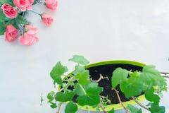 Het planten van zaailingen in potten op wit Royalty-vrije Stock Fotografie