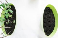 Het planten van zaailingen in potten op wit Stock Afbeelding