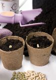 Het planten van zaden 1 royalty-vrije stock afbeeldingen