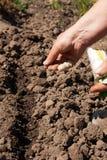 Het planten van zaden royalty-vrije stock afbeelding