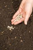 Het planten van zaden Royalty-vrije Stock Afbeeldingen