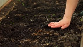 Het planten van zaden met de hand stock video