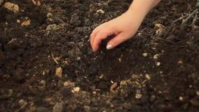 Het planten van zaden met de hand stock footage