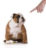 Het plassen puppy royalty-vrije stock afbeeldingen