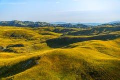 Het plateau op de berg in Montenegro stock afbeelding
