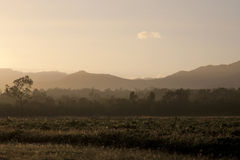 Het Platteland van Australië in de Ochtend Stock Afbeelding