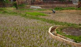 Het platteland van China stock foto