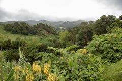 Het Platteland van de Azoren royalty-vrije stock afbeeldingen