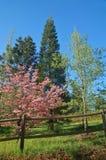 Het platteland van de lente Stock Afbeeldingen