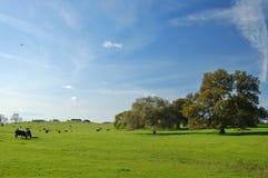 Het platteland van de lente Royalty-vrije Stock Afbeelding