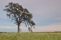 Het platteland van de lente Stock Fotografie