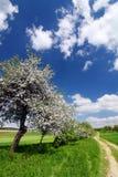 Het platteland van de lente met bloeiende bomen stock foto