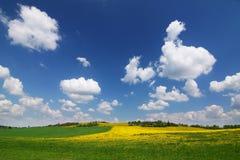 Het platteland van de lente met gele paardebloemen Stock Fotografie
