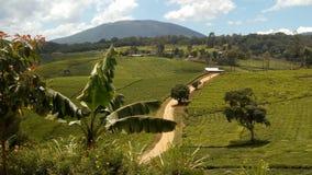 Het platteland van de theeaanplanting stock foto