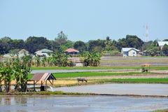 Het platteland van Filippijnen Royalty-vrije Stock Foto's