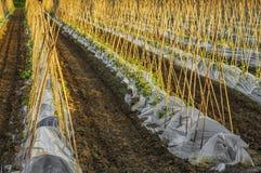 Het platteland van gewassen royalty-vrije stock foto's