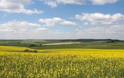 Het Platteland van Hampshire Stock Foto's