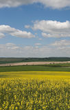 Het Platteland van Hampshire Royalty-vrije Stock Foto