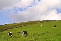 Het platteland van Yorkshire Stock Foto's