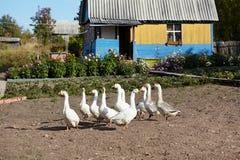 Het plattelandshuisje van het land Royalty-vrije Stock Foto's