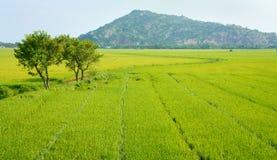 Het plattelandslandschap van Vietnam, padieveld stock foto