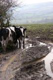 Het plattelandsscène van Devon Stock Afbeeldingen