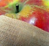 Het Pleister van de appel Royalty-vrije Stock Foto