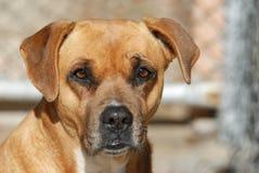 Het pleiten van verlaten hond in kooi royalty-vrije stock fotografie