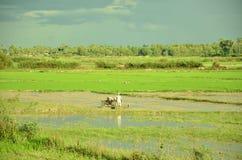 Het ploegen ricefield royalty-vrije stock afbeelding