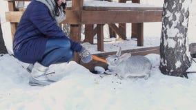 Het pluizige konijn van het donkerbruine vrouwenlokmiddel met wortel in de winterlandbouwbedrijf stock footage