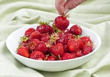 Het plukken aardbeien. Stock Fotografie
