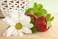 Het plukken aardbeien. Royalty-vrije Stock Foto