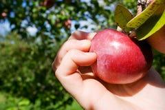 Het plukken Appel stock foto